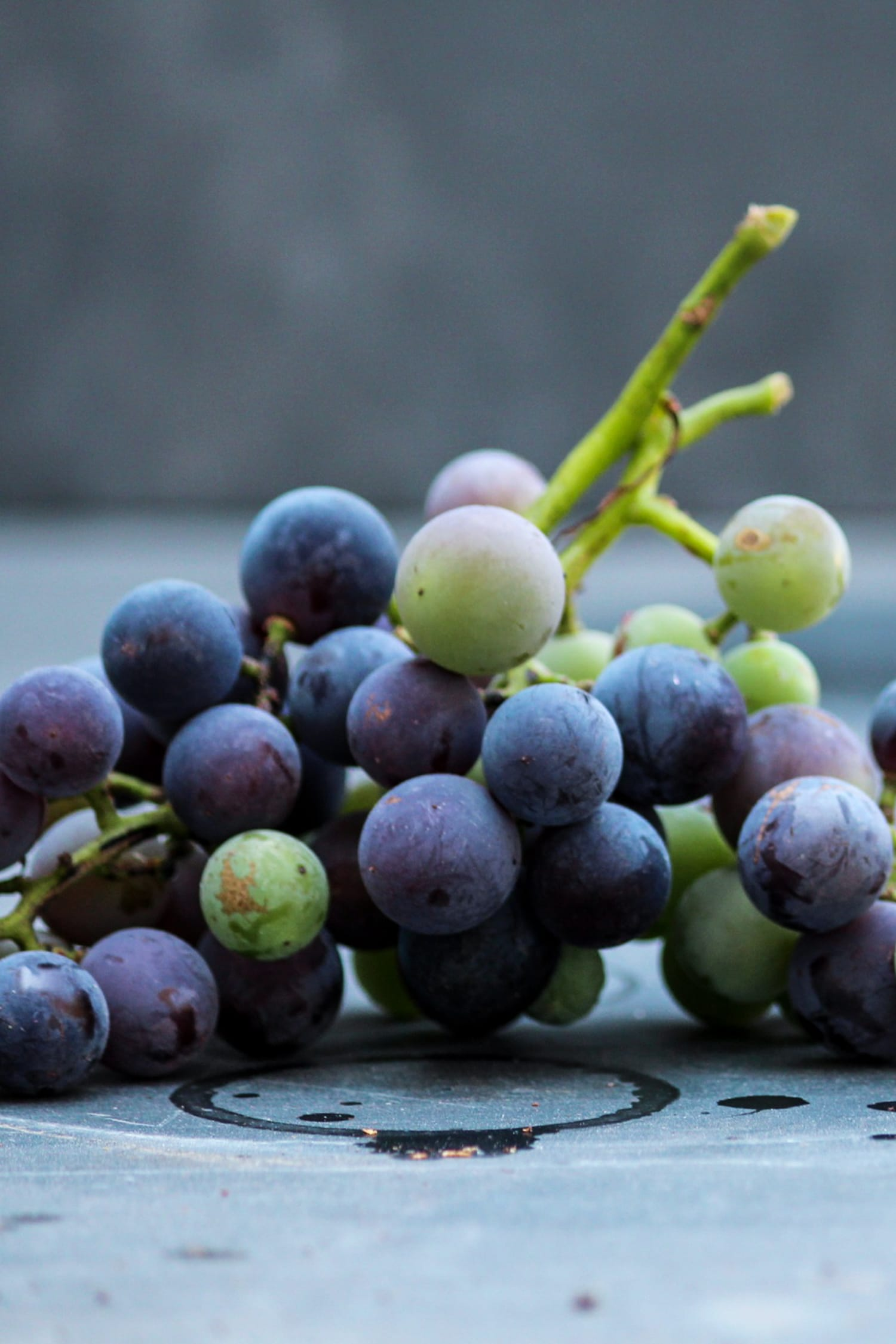 Concord grapes in both purple and green variety sitting on a piece of gray slate
