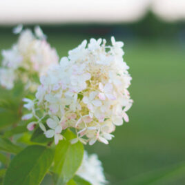 A Flower Garden Tour | Wyse Guide