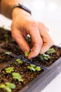 Hand picking out seeds from dirt in a black plastic container all on white surface