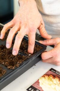 Finger pressing into dark soil in a seed starting tray with seed packet on the side