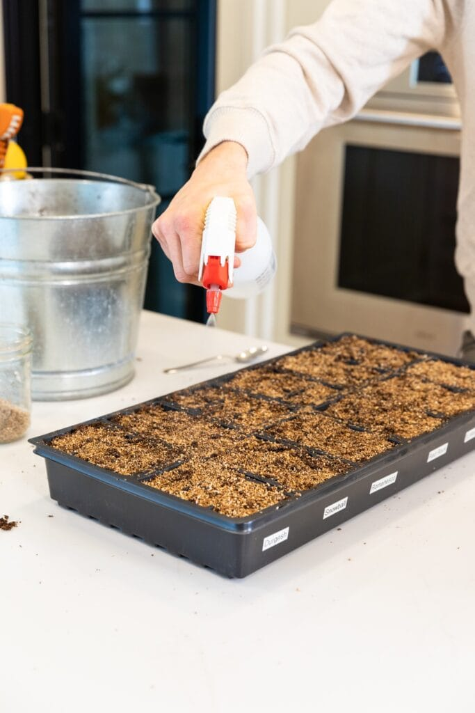 Hand holding water bottle spraying dark brown soil covered with vermiculite all on white countertop