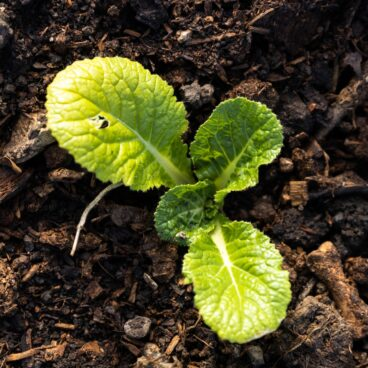 Top down view of green colored plant sitting dark brown dirt
